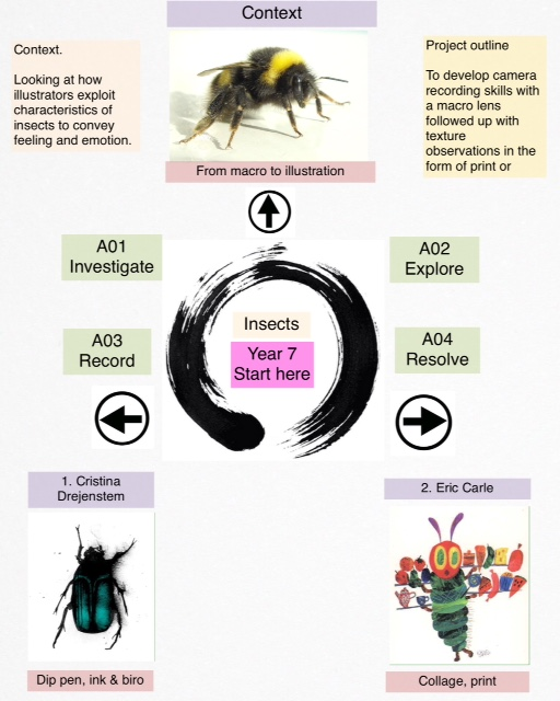 yr-7-insect-project